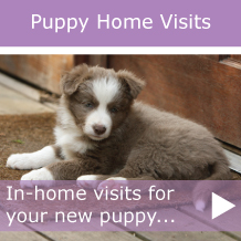 homevisits-puppy-callout