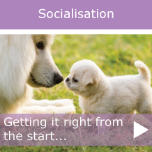 socialisation-puppy-callout